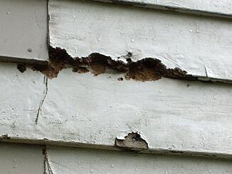 Wood Siding Problems
